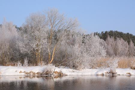 riverside trees: Trees in hoarfrost on snowy riverside Stock Photo