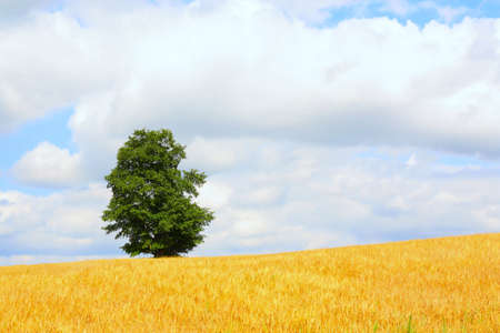 Rural landscape. The agricultural field, the sky and a lonely tree on skyline photo