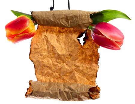edicto: Mensaje de la primavera. Flores en pergamino con copia-espacio. Aislado en blanco