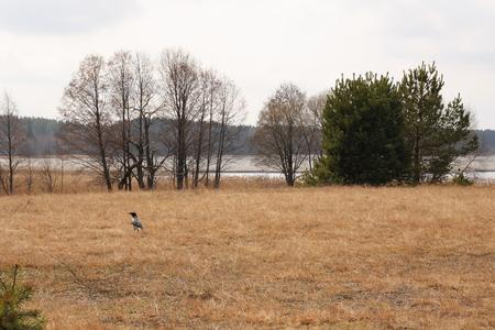 wakening: Some few sad landscape. And still it is spring! Nature before wakening