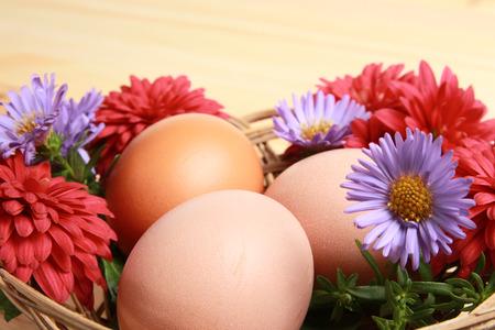 genesis: Abstract. Genesis. Eggs and flowers Stock Photo