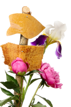 Information pointers and flowers on a white background photo