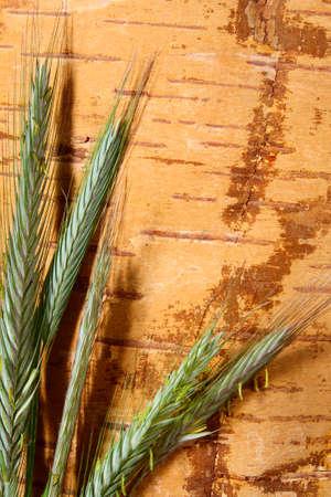 birchbark: Heads of rye on grunge background from birch bark