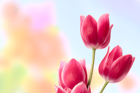 transmitting: Beautiful flowers on the abstract color background transmitting spring mood