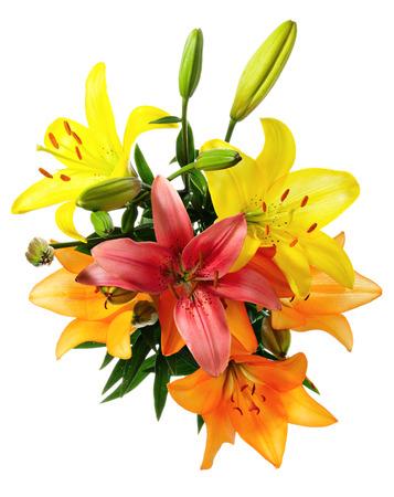 arreglo floral: Flores. Lirios multicolores sobre un fondo blanco