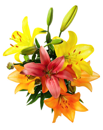 flower arrangement: Flowers. Multicoloured lilies on a white background Stock Photo
