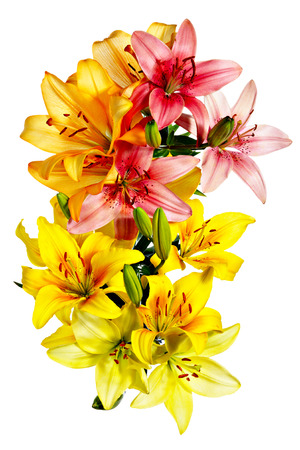 Aerial view of flowers. Variegated lilies on a white background