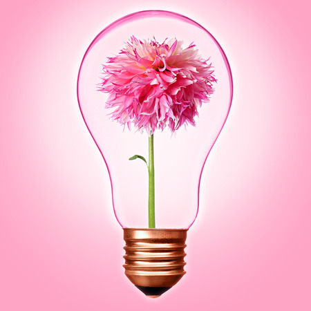 Love concept or environmental protection concept with bulb with bronze base and pink dahlia inside Banco de Imagens