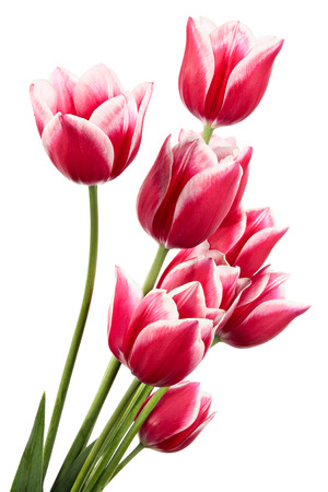 Beautiful bouquet of pink flowers isolated on white