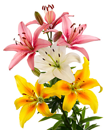 White, pink and yellow flowers. Lilies isolated on white background