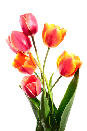 loveliness: Bouquet of spring flowers. Tulips on a white background