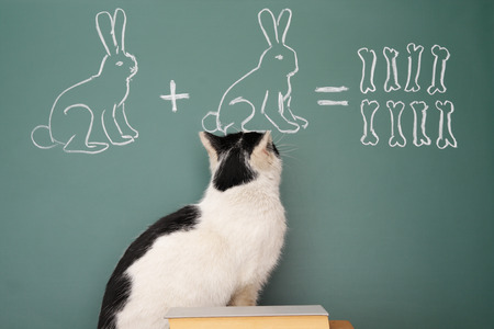 dodge: Education idea joke about dreamy cat studying arithmetic
