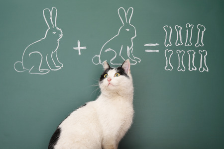 arithmetic: Education idea joke about dreamy cat studying arithmetic