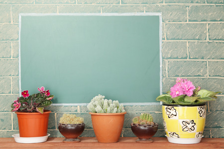 disparity: Violet flowers and cacti in flowerpots on wood stillage Stock Photo