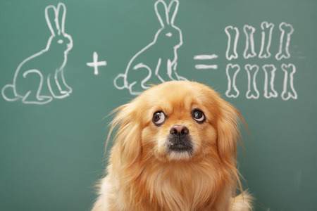 modest: Education idea joke about dreamy dog studying mathematics. Focus on eyes of dog Stock Photo