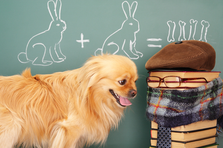 jest: Education idea joke with funny dog studying mathematics and teacher. Focus on eyesglasses of teacher