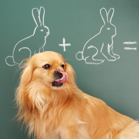 erudite: Jesting puzzle with funny dog studying mathematics