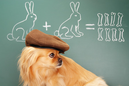jest: Education idea joke about dreamy dog studying mathematics. Focus on eyes of dog Stock Photo
