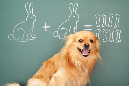 Jesting puzzle with funny dog studying mathematics photo