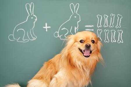 Jesting puzzle with funny dog studying mathematics