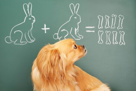 Education idea joke with funny dog studying mathematics. Focus on eyes of dog