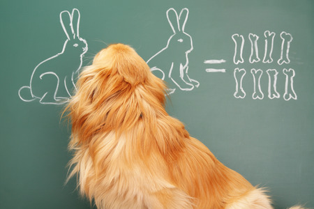 erudite: Education idea joke about dreamy dog studying mathematics