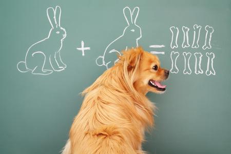 jest: Education idea joke with funny dog studying mathematics. Focus on eyes of dog