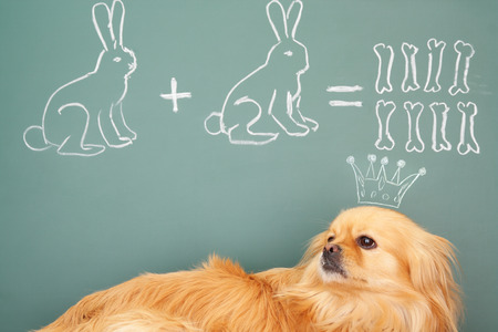 Funny education unusual concept mathematics is the Queen of Sciences photo