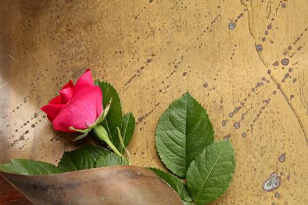 brassy: Abstract flower design with rose on brazen background
