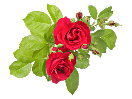 bourgeon: Flowers pattern, vintage view of red rose