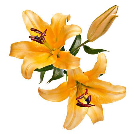 Vintage flowers pattern with lemon lilies isolated on white