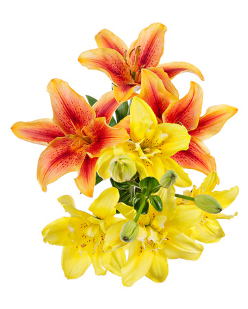 Flowers pattern with red and yellow lilies isolated on white background