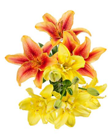 bouquet de fleurs: Motif de fleurs de lys rouges et jaunes isol� sur fond blanc Fleurs