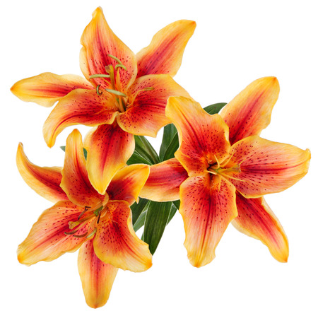 garden flowers: Flowers pattern with red-yellow lilies isolated on white background Stock Photo