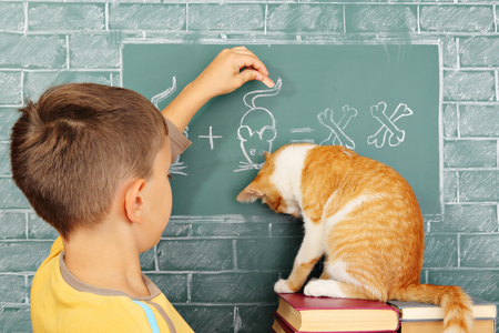 Education joke: The guilty learner the cat who incorrectly solved a problem and his teacher