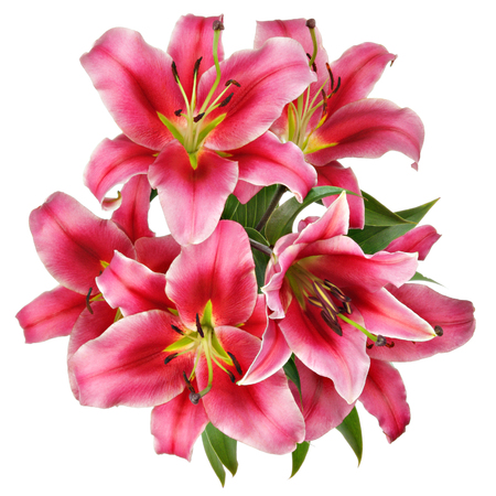 Vintage flowers pattern with pink lilies isolated on white