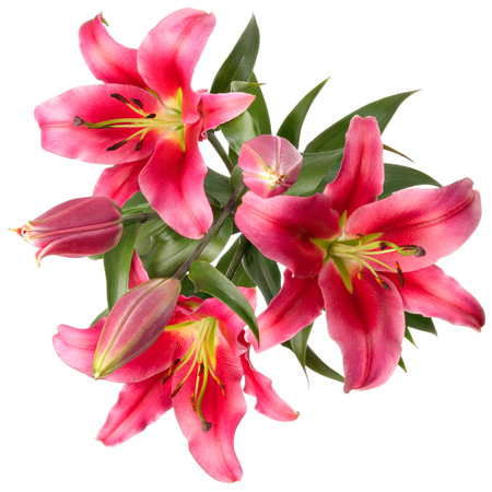 flores vintage: Vintage flowers pattern with pink lilies isolated on white
