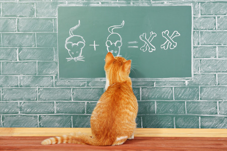 Education funny idea about red cat studying arithmetic