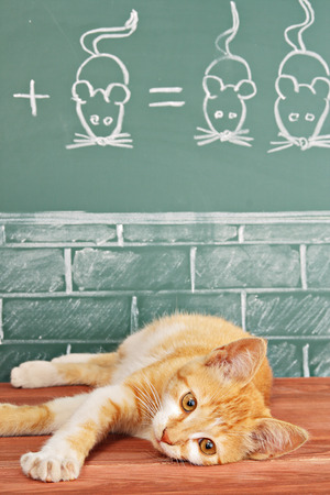 foxy: Education idea about foxy Cat studied mathematics on example of addition of mice