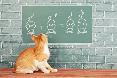 studied: Education idea about foxy Cat studied mathematics on example of addition of mice