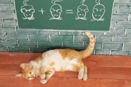 Education idea about red cat studied mathematics on example of addition of mice