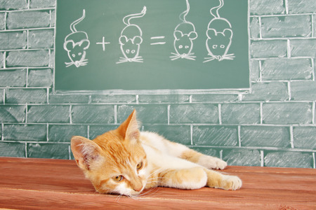 studied: Education idea about red cat studied mathematics on example of addition of mice
