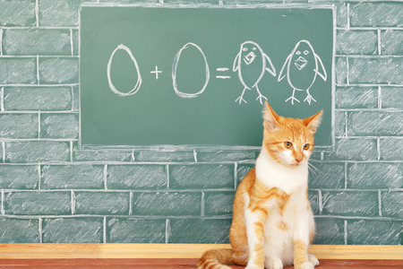 számtan: Education funny idea about red cat studying arithmetic on sample of addition of eggs