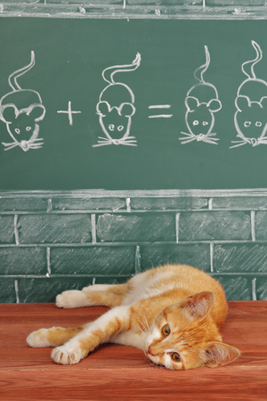 capable of learning: Education idea about foxy lazy Cat studied mathematics