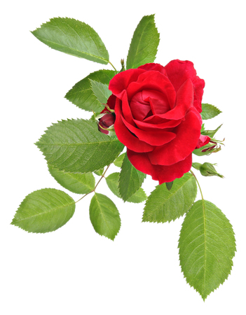 bourgeon: Vintage flowers rose pattern Stock Photo
