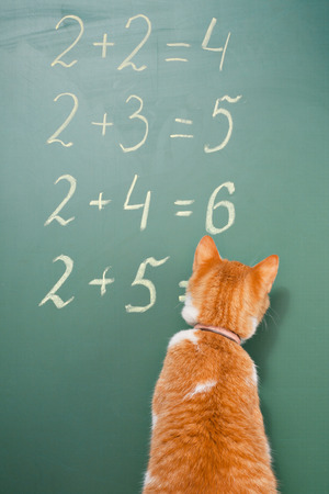 capable of learning: The red cat solving examples on mathematics