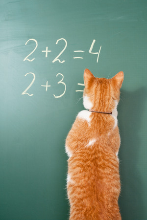 examples: The red cat solving examples on mathematics