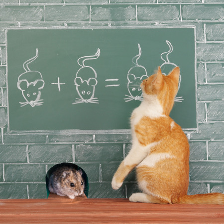 capable of learning: Education idea about foxy Cat studied mathematics on example of addition of mice