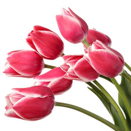 tulipan: Wiosenne kwiaty na białym tle Zdjęcie Seryjne