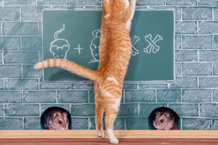 studied: Education joke idea about red Cat studied mathematics